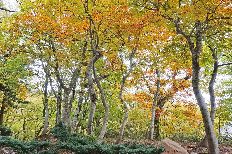 紅葉の美しい並木