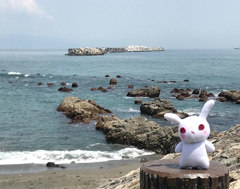 桂浜と葵ちゃん